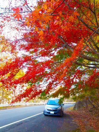 日帰りで楽しめる秋のドライブデートスポット関東編